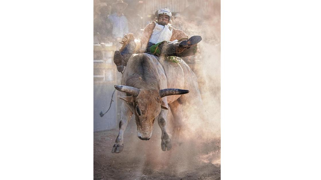 Jenny Davidson, Afternoon Ride
