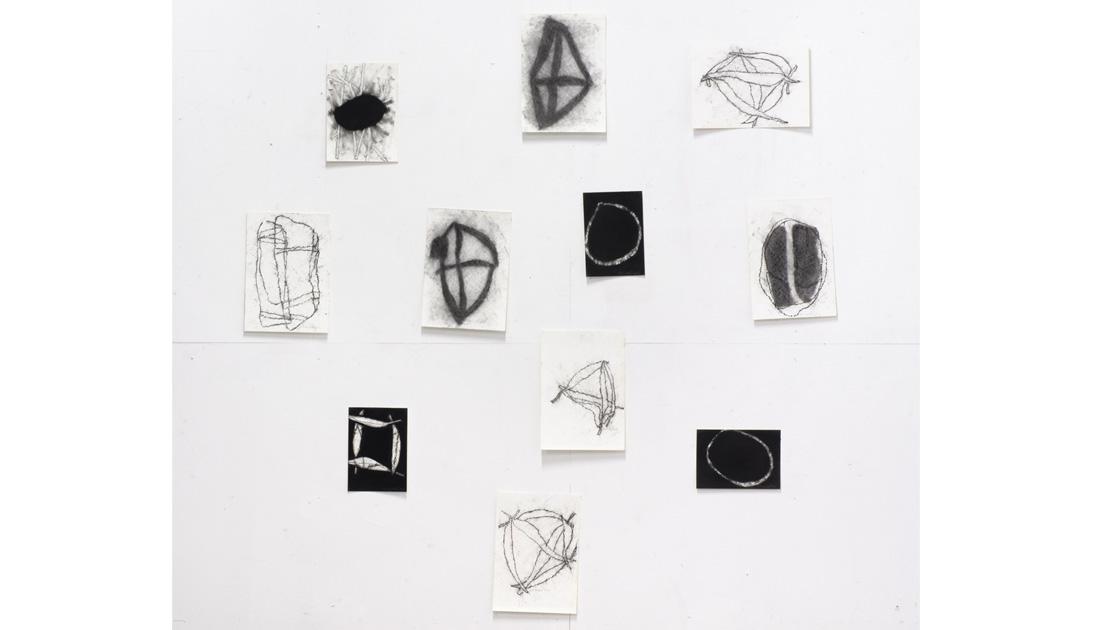 Eucalypt-Drawings