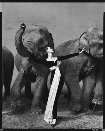Dovima-with-elephants,-evening-dress-by-Dior,-Cirque-dÔÇÖHiver,-Paris,-August-1955-2